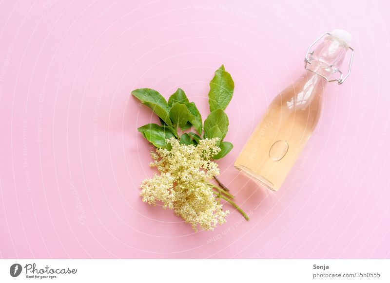 Homemade elderflower juice in a glass bottle and elderflowers on a pink background, top view Elderflower Syrup Glassbottle bleed plan Summer Beverage Yellow