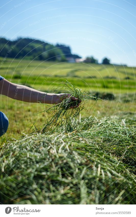 Farmer checks freshly mown hay by hand peasant Hay test Grass Fresh Man stop green Agriculture Colour photo Field Harvest Exterior shot Landscape Day Meadow