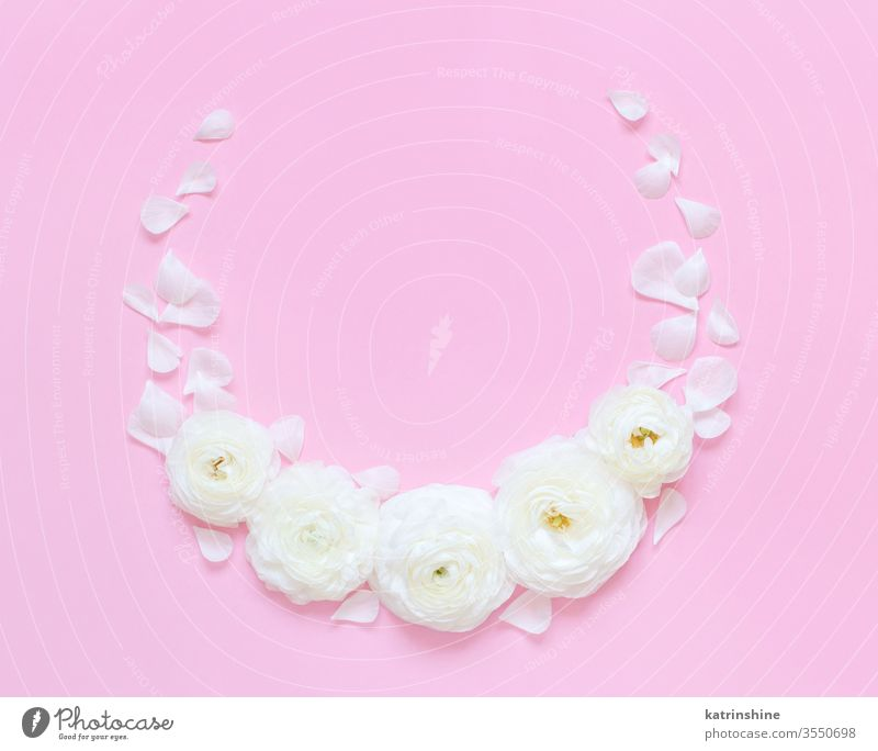 Circle frame made of ranunculus flowers on a light pink background circle spring romantic fuchsia pastel flat lay composition roses top view above petals