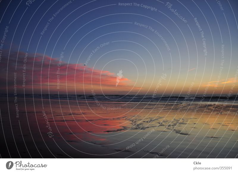 Sky Vacation & Travel Blue Green Water Ocean Clouds Beach Black Yellow Coast Sand Horizon Moody Pink Orange