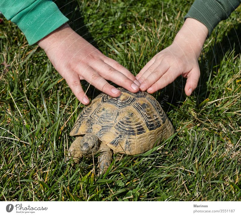 two hands on a turtle. kids and pets. joy positive emotional funny communication child animal boy lifestyle childhood summer hold background shell nature