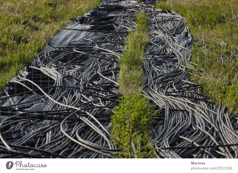 black irrigation pipes on field. gardening agriculture water farm fresh growth green organic vegetable soil plant natural drip growing farming system equipment