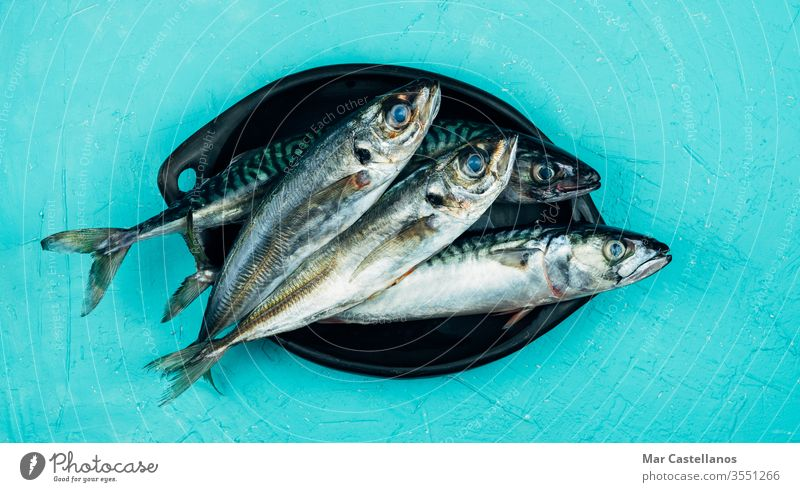 Fresh mackerel and horse mackerel on a black plate on a blue background Copy space. Seafood concept. black bowl copy space top view Scomber scombrus scombridae