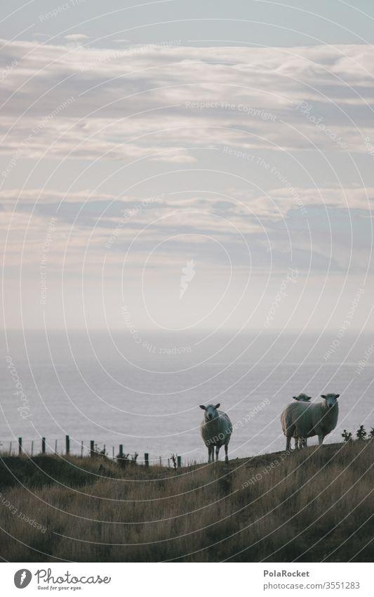 #As# Three From the coast Sheep sheep Coast New Zealand New Zealand Landscape Nature Exterior shot Colour photo Ocean Vacation & Travel