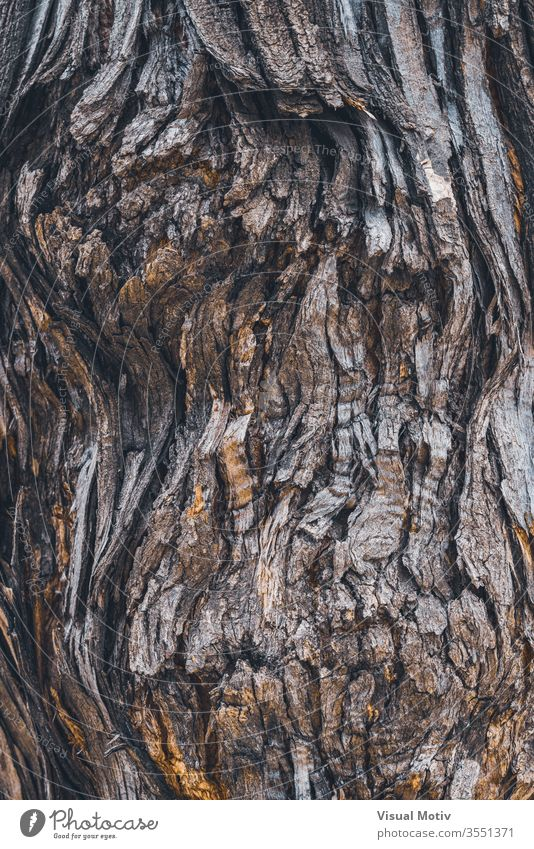 Texture of the bark of a Styphnolobium japonicum commonly known as Pagoda tree trunk crack curve rough texture background organic surface flora old nature plant