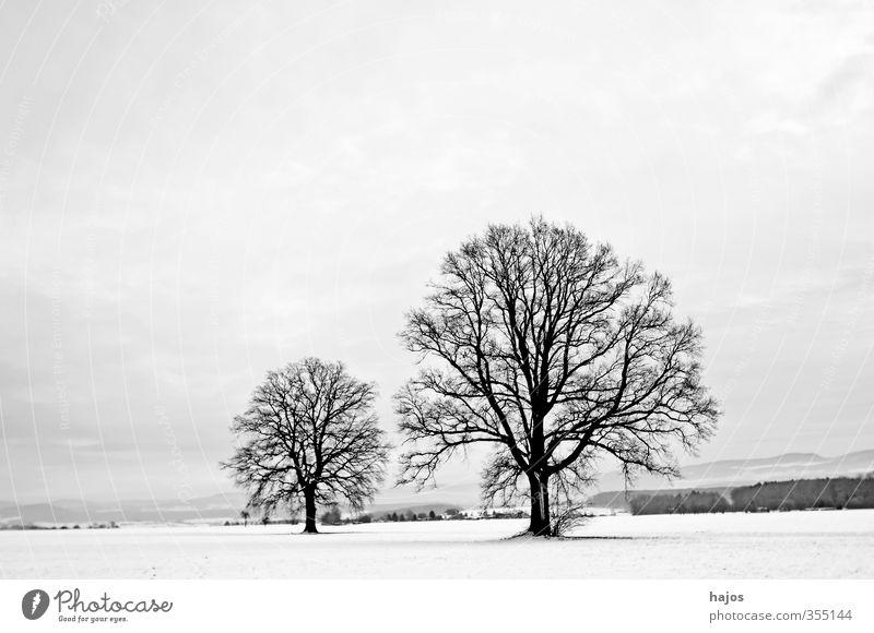 Oaks in winter Beautiful Calm Winter Snow Landscape Plant Clouds Ice Frost Tree Field Line Old Large White Peaceful Divide Oak tree Bleak colors Spartan Sparse