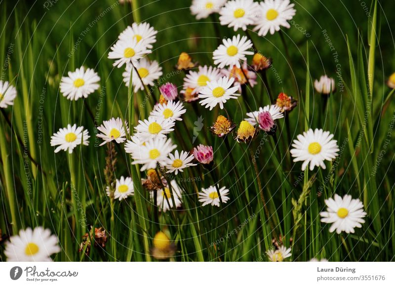 Small flowers between blades of grass spring Garden Nature Habitat Biology natural waxing species Earth flora Wild White Grass botanical Meadow wild flower