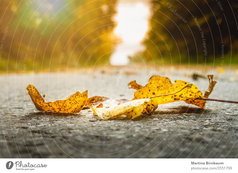 Golden autumn leaves on the ground vibrant fall bright park red october sunlight foliage nature season yellow sunshine green grass november landscape background