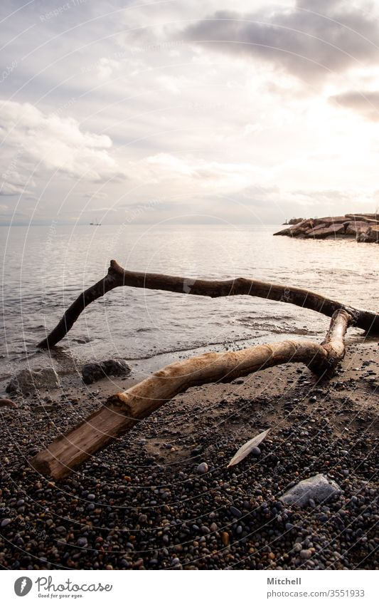 Driftwood Branch Sits by the Shore During Golden Hour water shoreline park sky nature view beach travel sunset golden vancouver west british columbia canadian