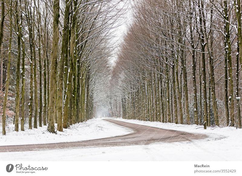 Kurvebreiche Allee allee baumallee bäume baumreihe straße kurven winter winterzeit jahreszeit schnee natur wald spaziergang idyllisch perspektive niemand