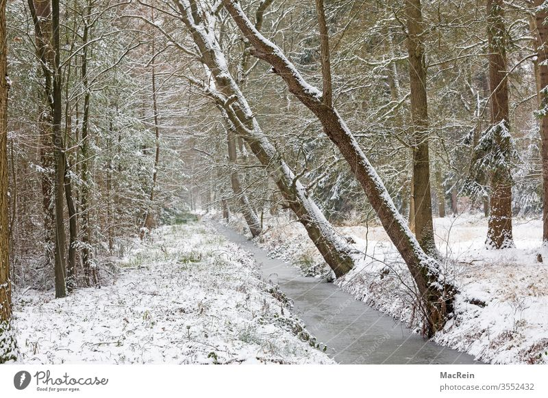 Brook run in winter Winter Snow winter landscape huts snowy chill Frozen diagonal trees nobody Copy Space Idyll Forest Body of water
