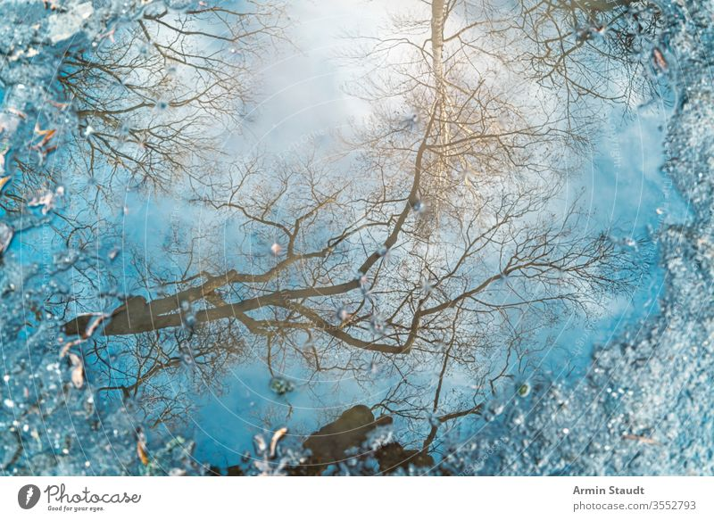 Reflection of a tree in a puddle for backgrounds abstract birch blue blur blurred branch bright clear defocused environment light natural nature outdoor rain