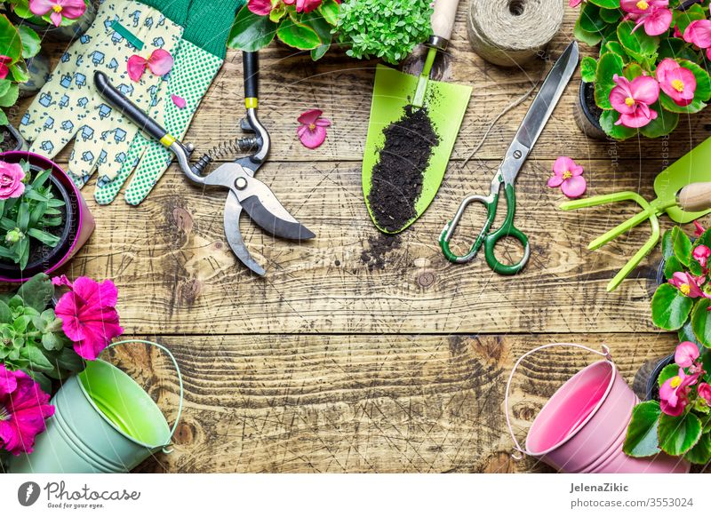 Composition with flowers and gardening tools green summer spring growth nature watering flowerpot house outdoors plant floral botanical housework wooden