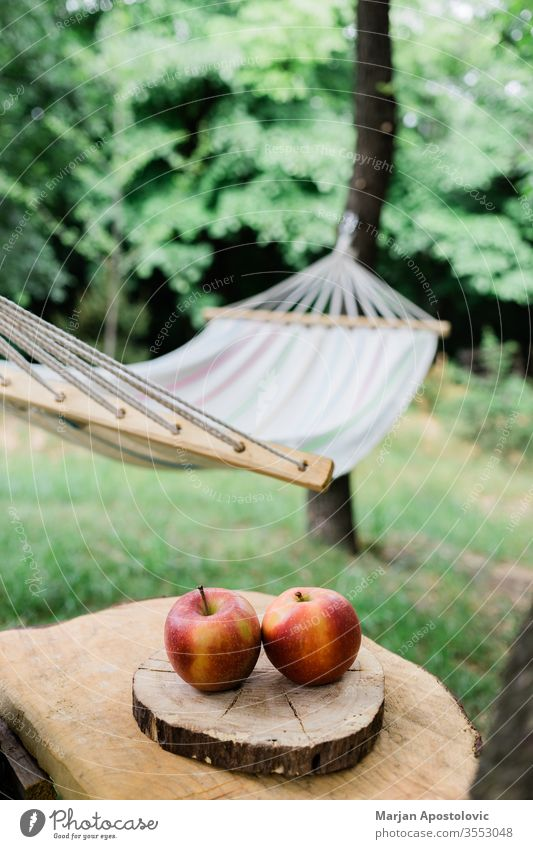 Cradle net in the backyard by the forest adventure apples calm concept cradle easy enjoy freedom furniture garden green greenery hammock healthy holiday idyllic