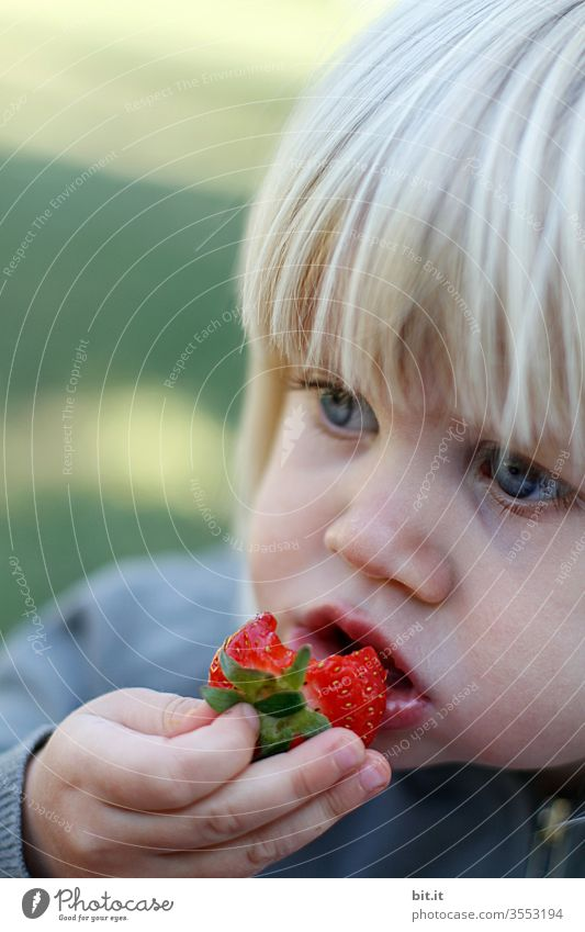 Ebbelle... strawberry Red Eating by hand Mouth Child girl Picked Snack Picnic Fruity Dish To enjoy Juicy Summer Food photograph Nature already okö ecologic
