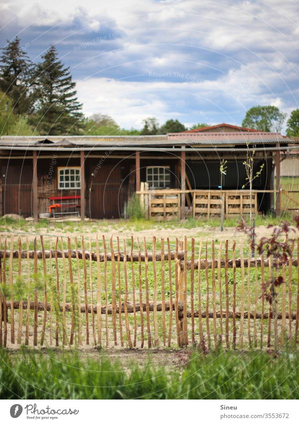 Fence in front of horse stable paddock Stable Leisure and hobbies Barn Meadow Landscape Environment Nature Summer green wooden slat fence Field huts firs