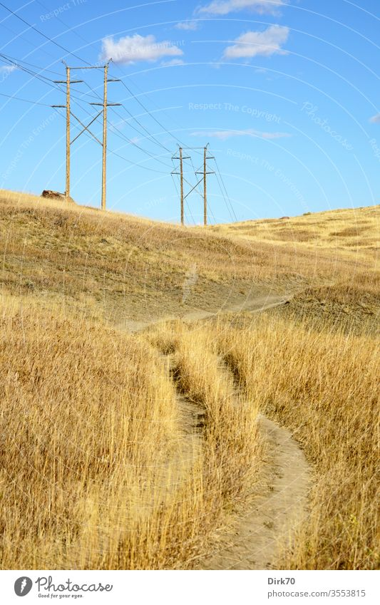 Prairie in Colorado prairie Grass Meadow Dry aridity dry grass Power lines Energy power supply rural bouldering Exterior shot Nature Landscape Field Sky Summer
