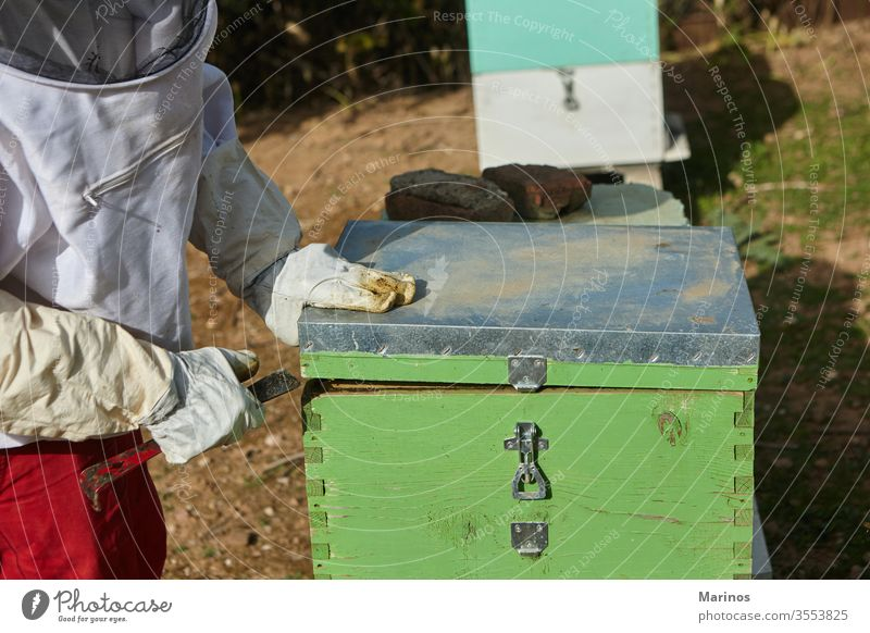 beekeeper working at the apiary. cell insect beekeeping holding farming frame honeycomb wax apiculture nature worker apiarist agriculture summer beehive outdoor