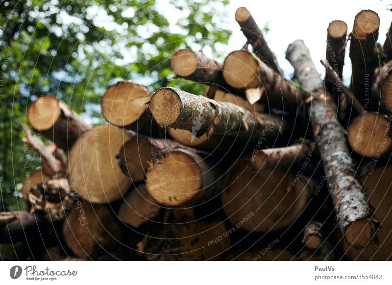 Wood pile Wood pile Forestry work Woodpile Stack of wood firewood Wood chopping woodpile Firewood Wooden house forestry Nature forestry workers