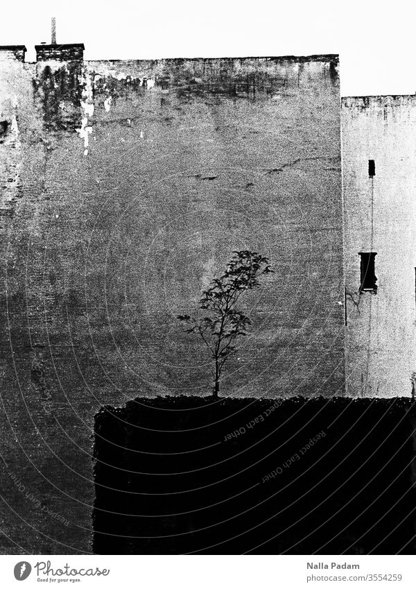 Nature meets urbanity Backyard Deserted black and white Analog House (Residential Structure) Exterior shot built tree Black & white photo Town Loneliness