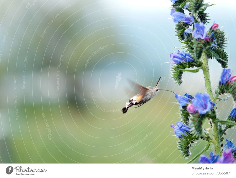dove tail Sky Nature Summer Plant Sun Flower Animal Leaf Forest Grass Spring Blossom Garden Park Flying Field