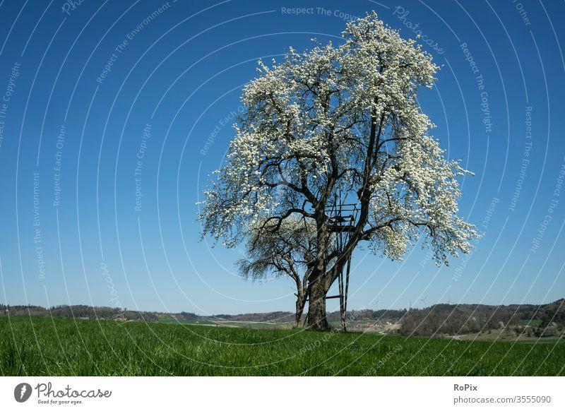 Flowering tree in cloudless weather. hillock England peak district meadow Meadow Grass Wall (barrier) Landscape Nature Weather Summer buzzer Clouds sky sky