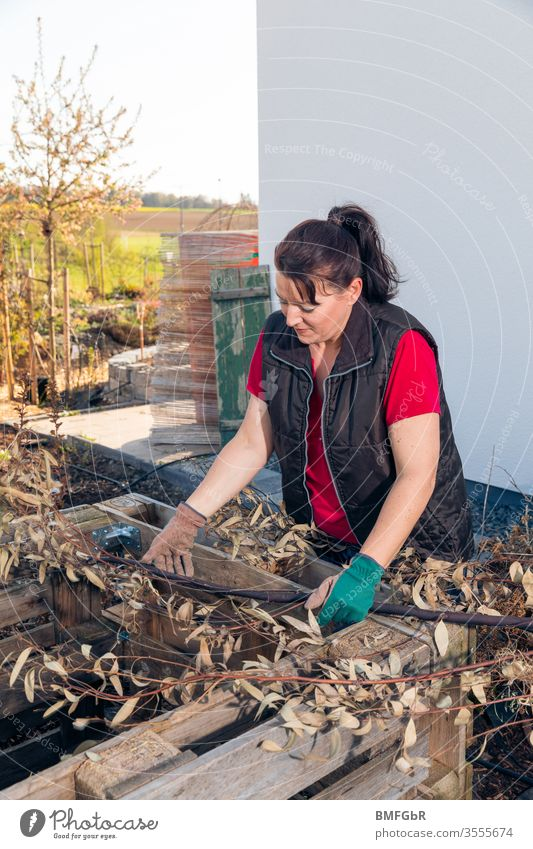 Woman brings branches into the raised bed as a base Human being Garden Gardening vegetable gardening Exterior shot Leisure and hobbies Colour photo