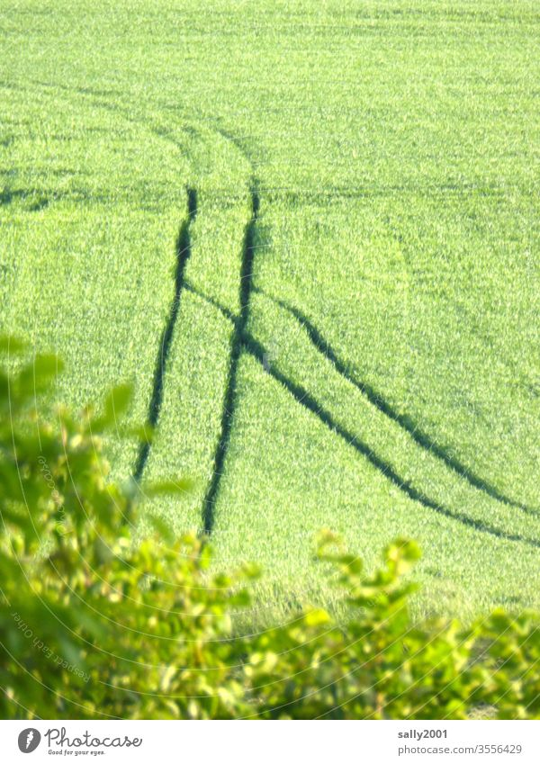 rutting... Field Grain Tracks incisions Switch Agriculture Impression Ear of corn green grain Growth Transport Lanes & trails Rut Summer
