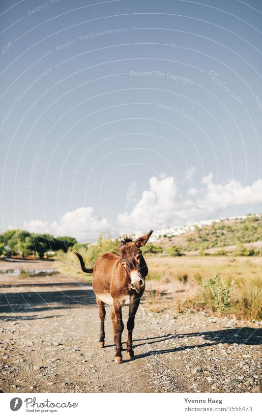 Joyful donkey Summer Summer vacation Donkey Dog-ear Exterior shot Animal Colour photo Animal portrait Nature Curiosity Looking into the camera Brown Deserted