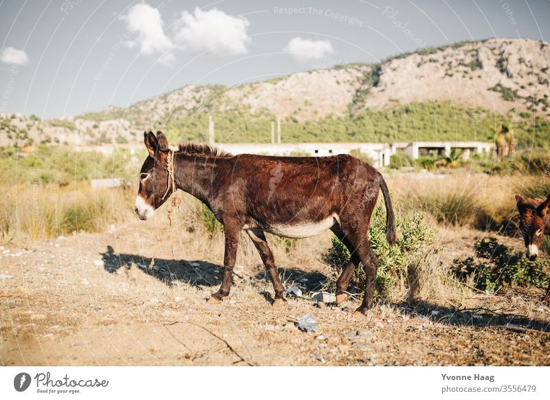 ass Summer Summer vacation Donkey Dog-ear Exterior shot Animal Colour photo Animal portrait Nature Curiosity Looking into the camera Brown Deserted Farm animal
