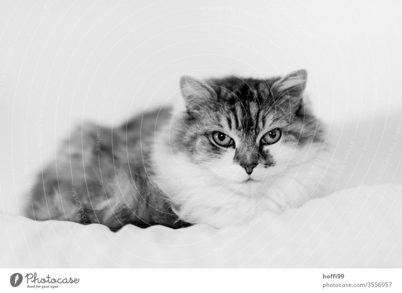 Portrait of a cat Cat Animal portrait Pet Domestic cat Animal face Cat eyes Observe Cat's head Cute Whisker Pelt Looking Looking into the camera 1 Cuddly