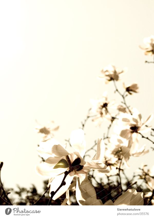 Old Sky Dark Style Blossom Bright Elegant Horizon Treetop Tree