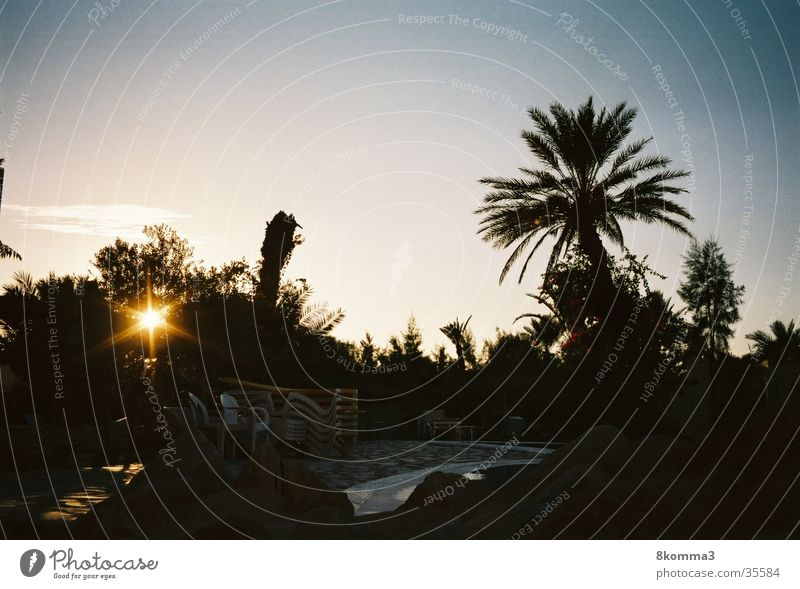 palm grove Palm tree Sunset Vacation & Travel Tunisia Contentment