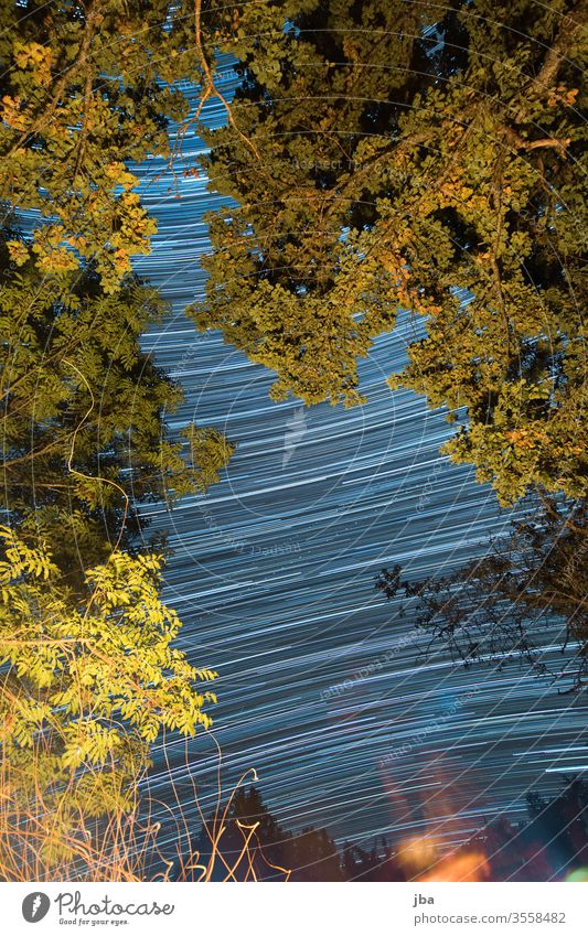 Long time exposure from a campfire Long exposure Starry sky stars long exposure Oak tree Branch branches leaves Fire Embers Nature out Sky Night sky Evening