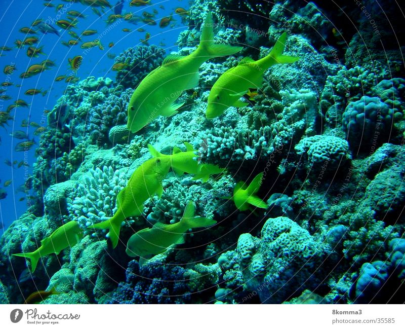 Ocean Fish Dive Underwater photo Egypt Africa