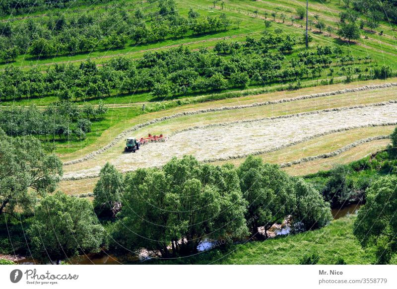 Haymaking Hay harvest Agriculture Harvest Grass Nature Work and employment Plant Landscape hillock Meadow Field Growth green Fresh Farm Country life Summer