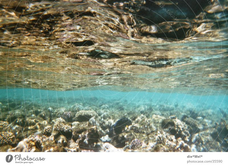 underwater Dive Snorkeling Underwater photo Ocean Transparent Shoal of fish Coral Air bubble Light Sun Fish Red Sea Blue Water Nature Movement Water wings