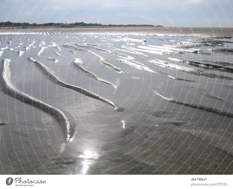 Water Sun Ocean Beach Vacation & Travel Calm Gray Sand Landscape Bright Waves Beach dune Netherlands Algae