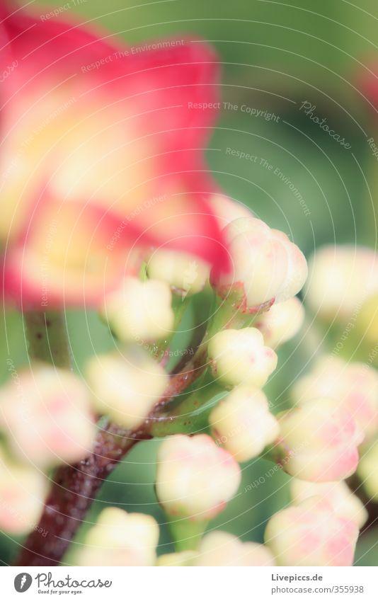 Nature Beautiful Plant Sun Red Flower Leaf Environment Spring Blossom Garden Natural Park Orange Pink Illuminate