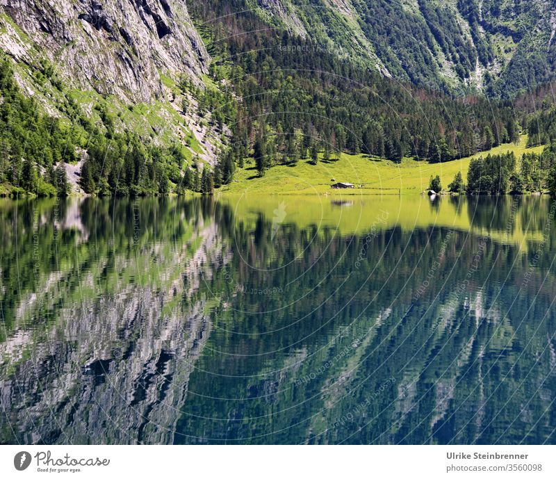 Reflection of a mountain pasture in the water of the Königsee in Berchtesgaden Alps Lake Water reflection Alpine pasture mountains stone Lake Obersee