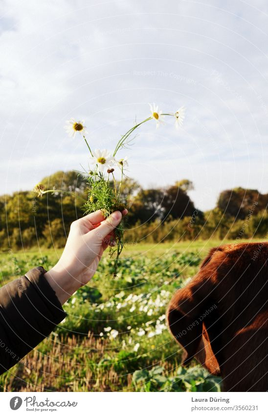 Dog on meadow looking at flowers in hand Curiosity Moody already Perspective by hand Field Sky Nature Exterior shot Meadow Colour photo Environment