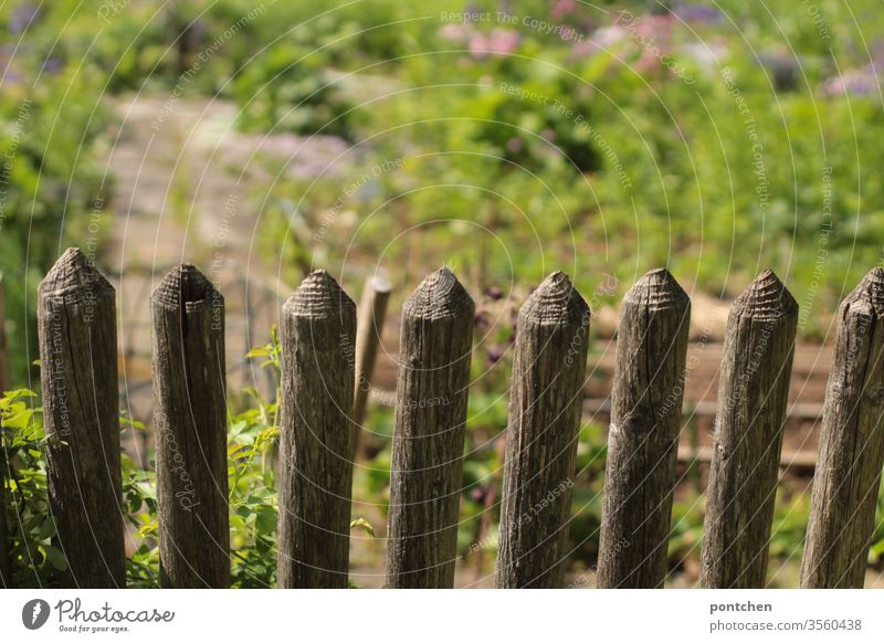 View into a blooming garden over a wooden fence. Beds, planting. Wooden fence Garden prate grow blossom green spring Plant Nature bleed natural