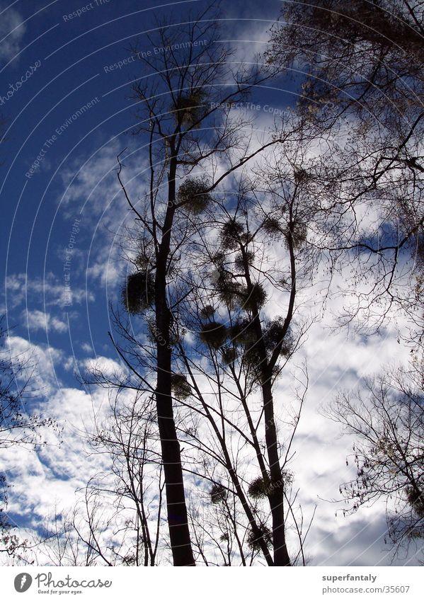 Sky Tree Blue Clouds Autumn