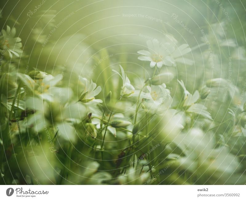 Pastel meadow Meadow little flowers Ground cover plant bleed blossom Small Near Many Motion blur Blur fragrant Nature Plant spring Exterior shot Colour photo