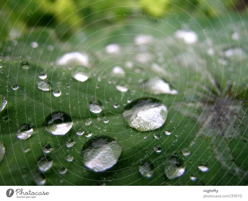 let it rain Leaf Plant Green Drops of water Water Rain Rope Nature Macro (Extreme close-up)