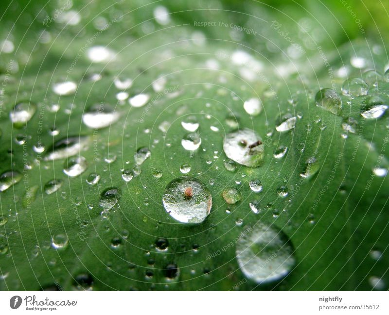 Nature Plant Green Water Leaf Natural Rain Growth Fresh Drops of water Wet Pure Fluid Damp Leaf green