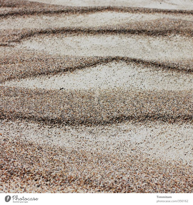 Design. Vacation & Travel Beach Environment Sand North Sea Denmark Simple Natural Brown Green Esthetic Undulation Line Colour photo Subdued colour Exterior shot