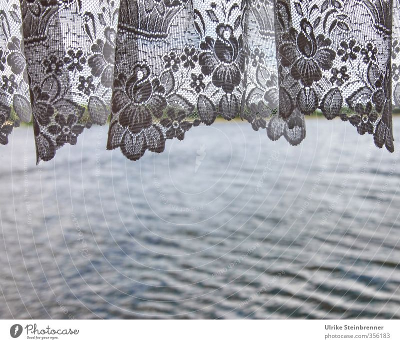 Beautiful Water Plant Flower Spring Interior design Car Window Style Lake Waves Tourism Living or residing Design Decoration Trip Blossoming