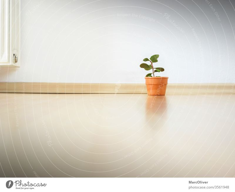 Minimalism apartment - Only a small plant in the apartment Minimalistic minimalism small compound Plant empty apartment Thrifty Frugality unobsessed Consumption