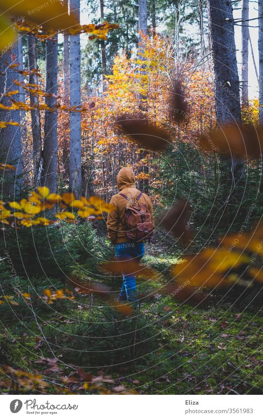 A man walks through an autumnal forest Man Autumn Forest To go for a walk foliage Foliage colouring Nature Autumnal Autumn leaves Season Trip Yellow Backpack